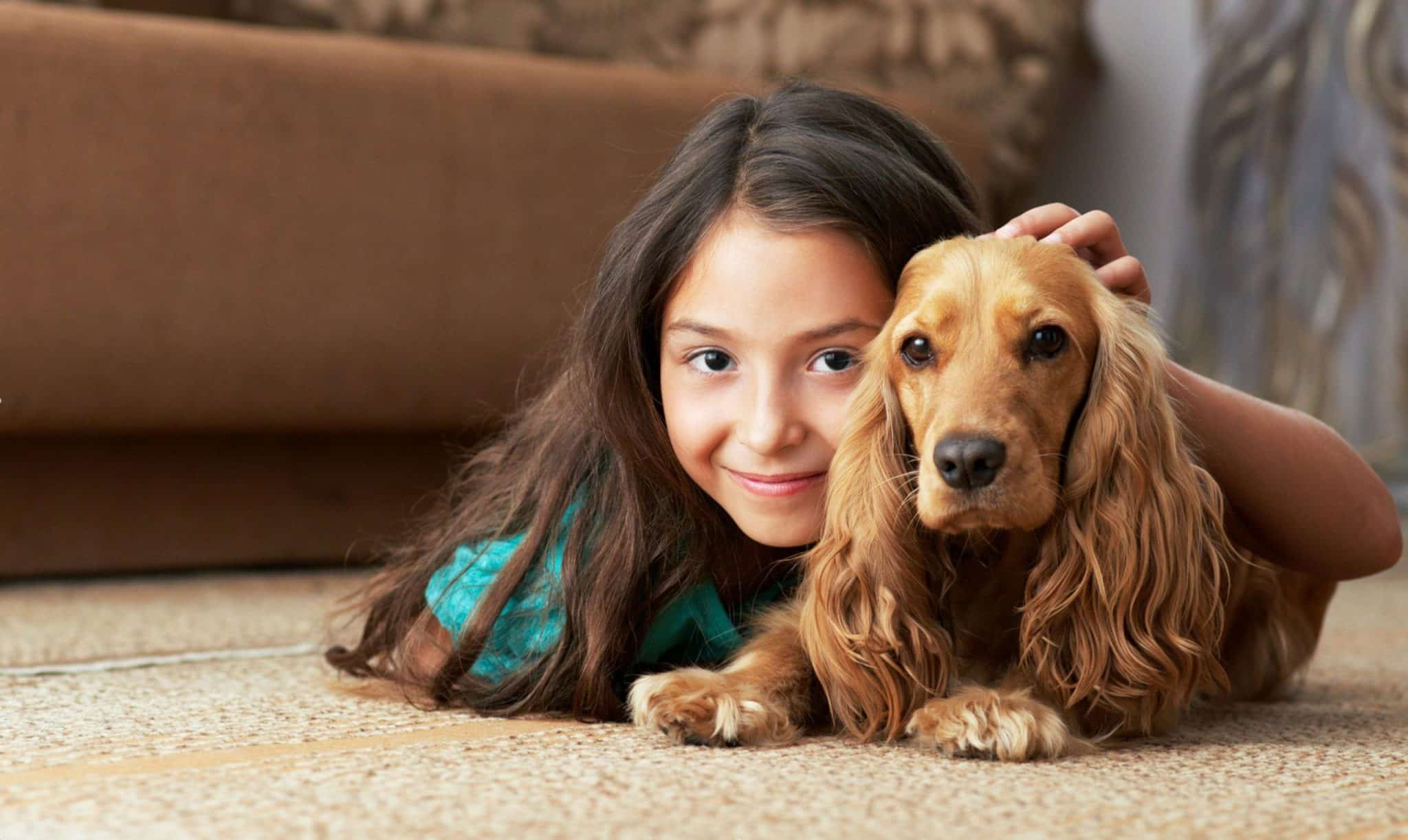 pet urine removal service for carpets and more